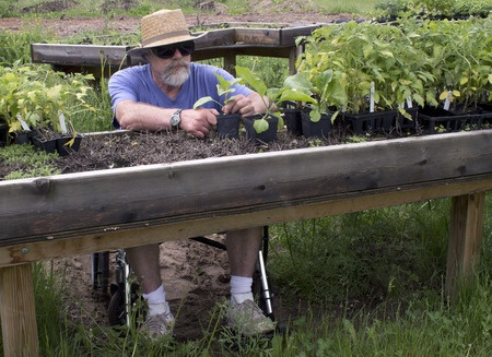 Man in a wheelchair working with his plants at a raised potting bench